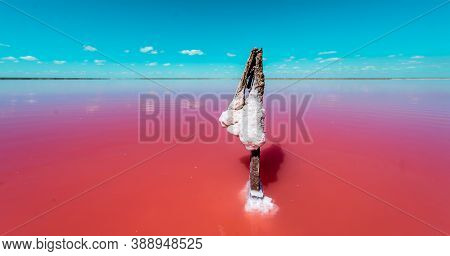 The Salty Shore In Ukraine, Europe. The Water Looks Pink Due To A Special Algae That Grows In High L