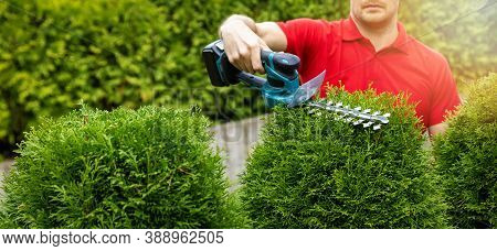 Landscaping Service - Gardener Pruning And Shaping Evergreen Thuja Hedge With Electric Trimmer. Copy