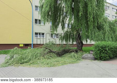 A Large Thick Branch Of A Tree Broke And Fell. A Tree Branch Broke During A Storm