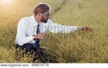 Male Agrarian Squatting In Ripe Field Examining Crops Before Harvesting Taking A Close Look