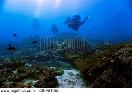 Underwater Landscape With Scuba Divers And A Leopard Shark. From Phi Phi Islands In Thailand.