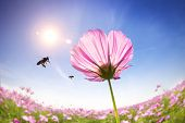 bee and pink daisies on the sunlight background poster