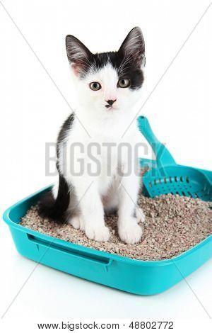 Small kitten in blue plastic litter cat isolated on white