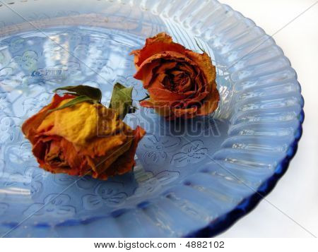 Dry Roses On Blue Plate