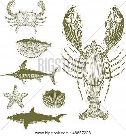 Woodcut Sea Creatures