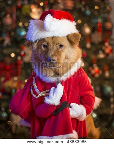 Dog dressed up as Santa Claus with Christmas tree in the background. poster
