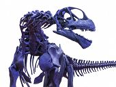 Blue menacing tyrannosaurus rex skeleton on white poster