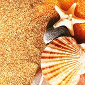 Sea Shell. Summer vacations backgrounds for your design poster