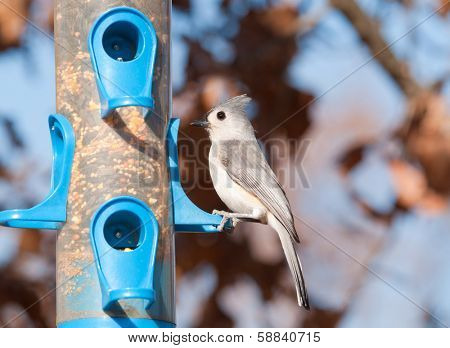 Baeolophus bicolor, Tufted Titmouse sitting at a bird feeder in winter poster