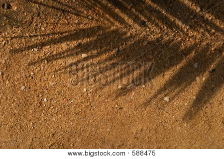 Leaf Shade On Brown Sand