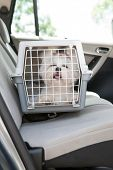 Small dog maltese sitting safe in the car on the back seat in a safety crate poster