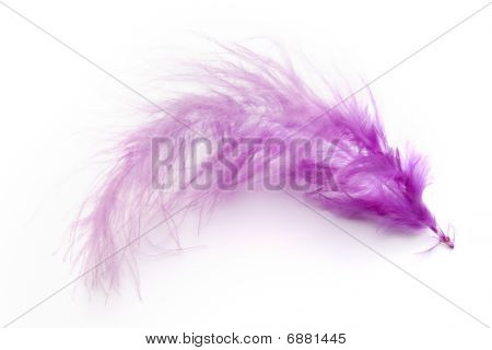 closeup of purple feather on white background poster