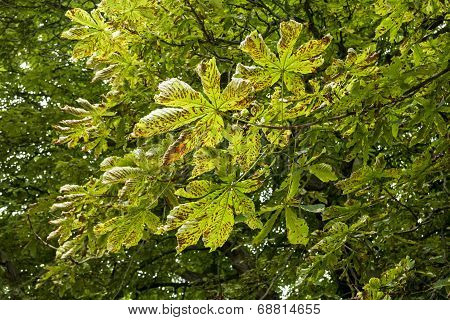 Damaged Leaves