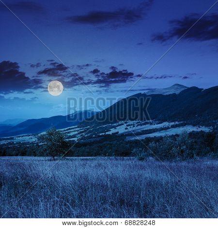 Trees Near Valley Near A Mountain Foot At Night