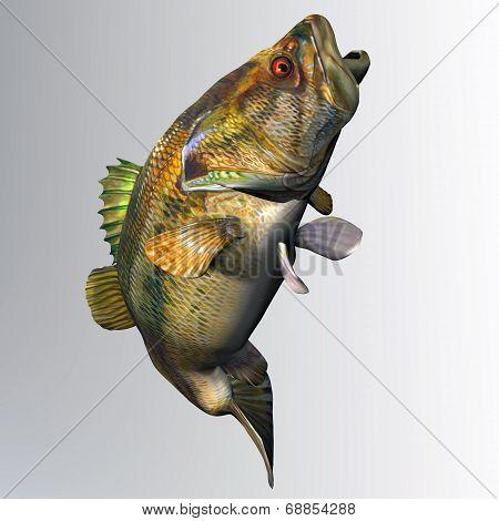 Largemouth Bass Strike