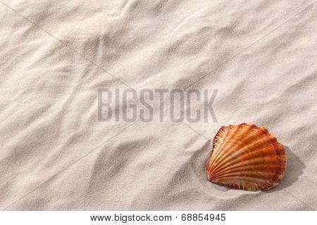 a shell lies on a sandy beach. desire for fair and recreation.