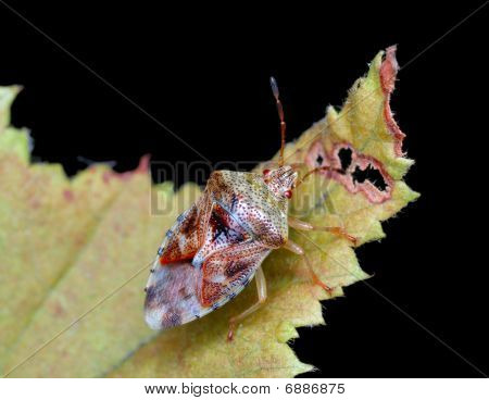 Bug on a leaf against the cloudy sky poster