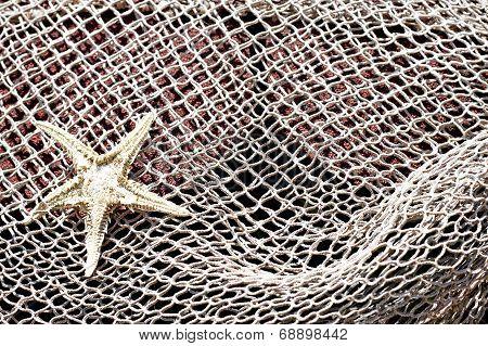 Starfish and fishnet background