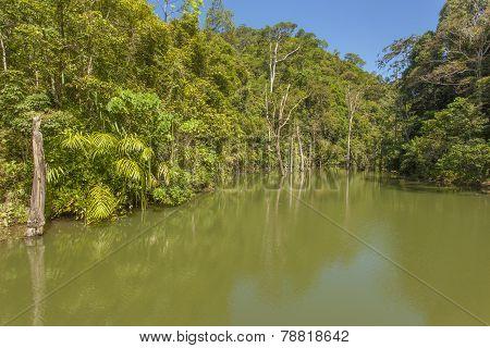 Tropical Jungle Lake In Thailand, Krabi, Lanta