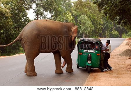 Elephant And Auto Rickshaw