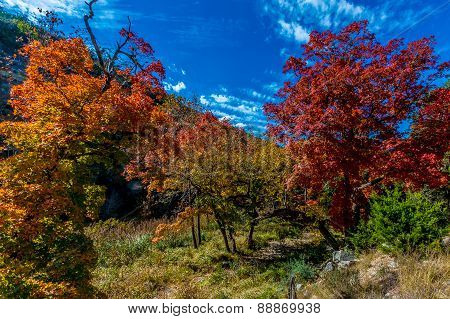 Brilliant Red and Orange Foliage at Lost Maples State Park, Texas