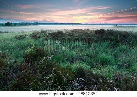 Misty Summer Sunrise On Marsh