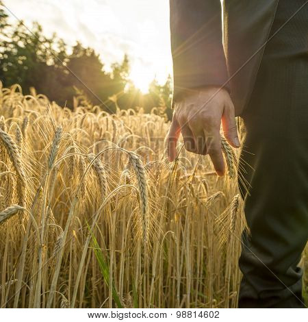Front view of businessperson touching an ear of ripe golden wheat in a conceptual image for business and prosperity. poster