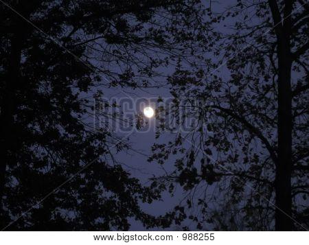 Autumn Moon 2