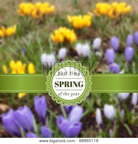 Spring blurred poster with crocuses.