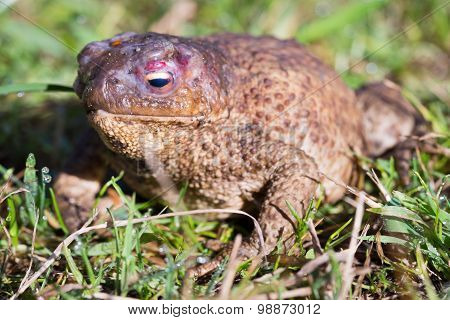 Close Up View Of The Toad