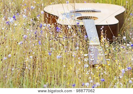 Wild Flowers Background