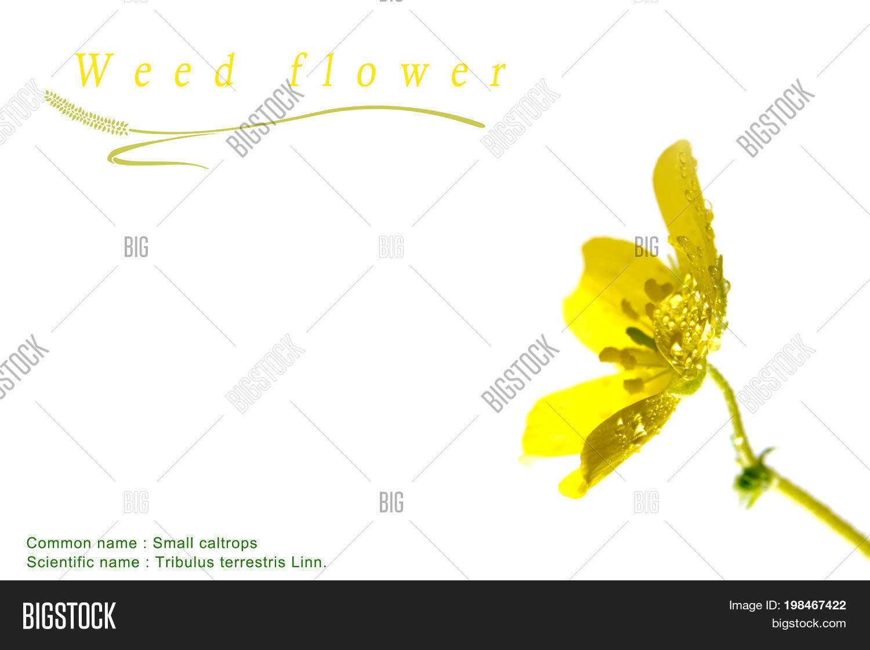 Yellow Flower Small Image Photo Free Trial Bigstock