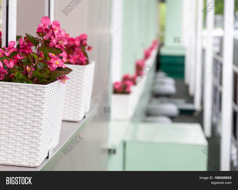 Background Flower Pots Image Photo Free Trial Bigstock
