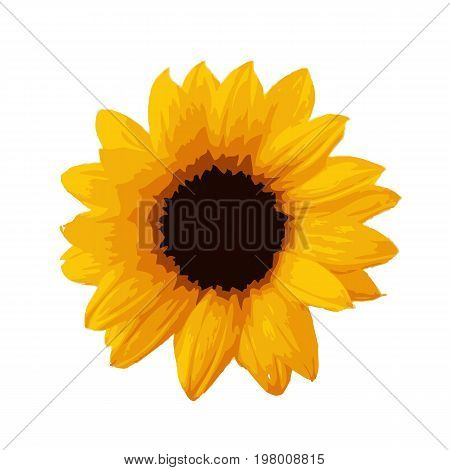 Sunflower icon isolated on white background. Beautiful yellow sunflower. Vector stock.