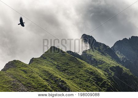 picture of crow flying in cloudy mountains, carpathians, Romania