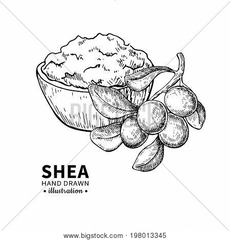 Shea butter vector drawing. Isolated vintage  illustration of branch and butter. Organic oil engraved style sketch. Beauty and spa, cosmetic ingredient. Great for label, poster, flyer, packaging design.