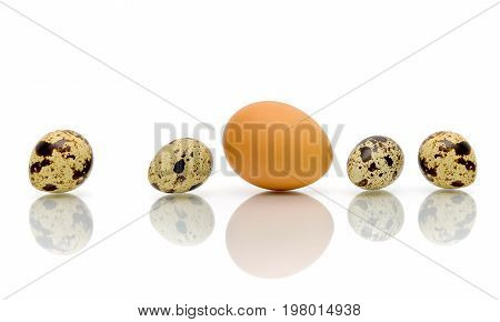 Eggs of different types on a white background with reflection. Horizontal photo.
