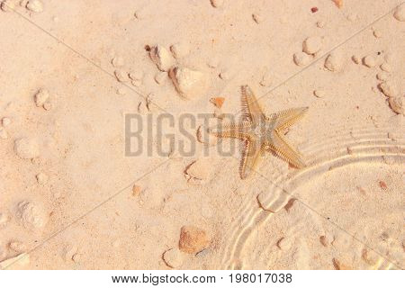 Starfish On The Beach / Starfish On The Beach With Sand In The Background