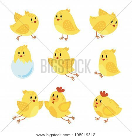 A set of cartoon chicken. Collection of happy yellow chicks. Little birds. Children of chicken and rooster.
