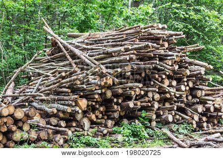 Heap of tree trunks. Felling trees in the forest