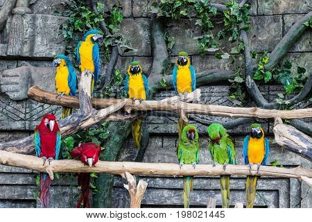 Parrots bird macaw sit on a branch