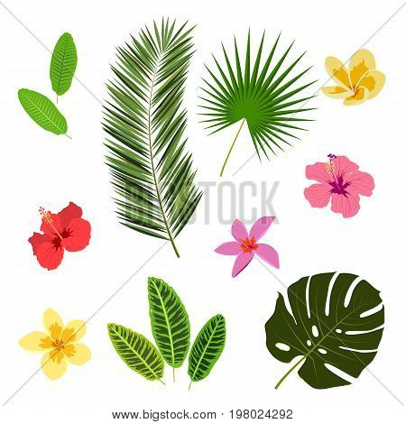 Tropical leaves and flowers, summer elements for your design, banner, flyer, poster, etc. Vector illustration in eps8 format.