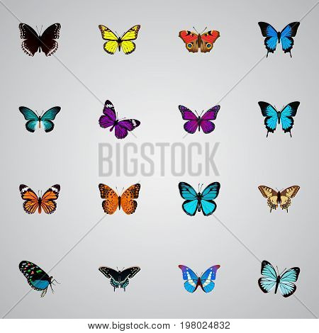 Realistic Purple Monarch, Bluewing, American Painted Lady And Other Vector Elements
