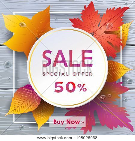 Autumn Sales banner, Sale Vector illustration. Fall sales season gift card with realistic drawing maple leaves, leaf fall on grey wood texture, water drops background.