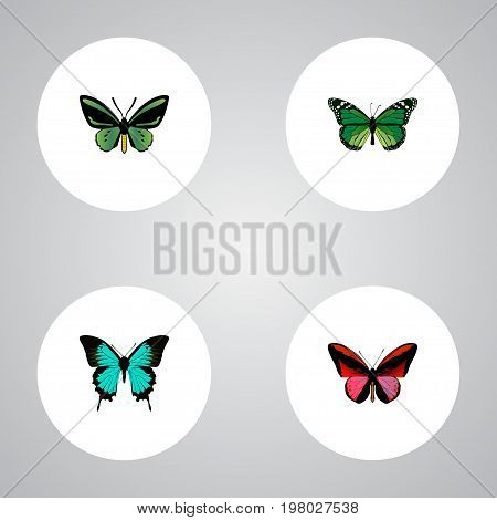 Realistic Birdwing, Tropical Moth, Copper And Other Vector Elements