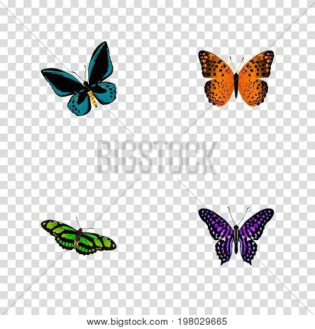 Realistic Demophoon, Green Peacock, Polyommatus Icarus And Other Vector Elements