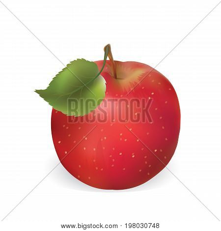 apple is isolated on a white background. Vector illustration of an apple. Realistic red apple