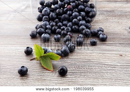 Freshly Picked Blueberries.juicy And Fresh Blueberries With Green Leaves On Rustic Table. Bilberry O