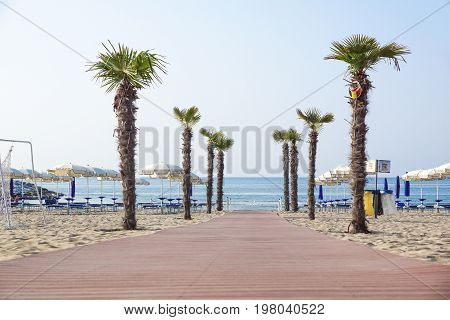 JESOLO , ITALY 02, JUNE 2017 : Pedestrian walkway to beach access with palm trees. Queso system is the best way to get on the beach for bathers on summer vacation .Palm trees in the city park .