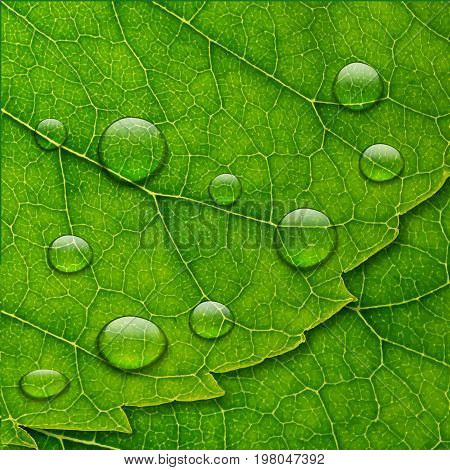Vector Water Drops On Green Leaf Macro Background